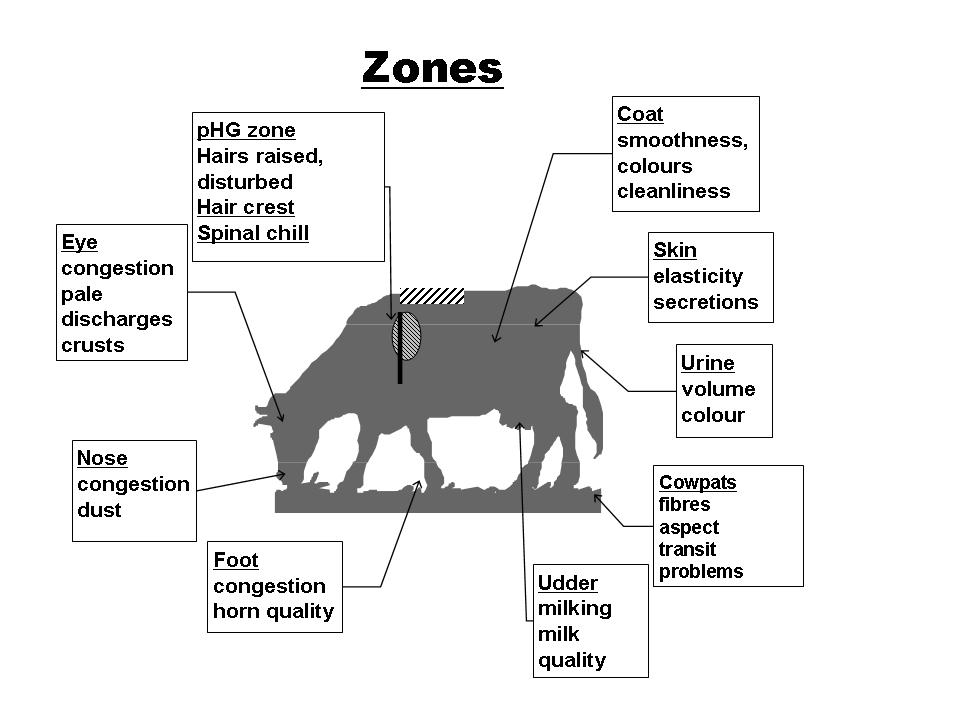 OBSALIM- Cattle feeding - Zones of observation for feeding symptoms.